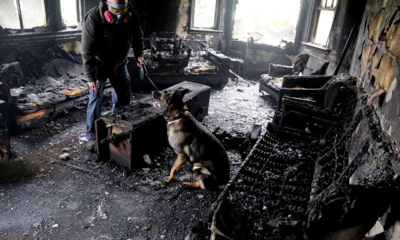 Dogilike.com :: รู้หรือไม่ สุนัขช่วยสืบค้นหลักฐานการวางเพลิงได้ ?