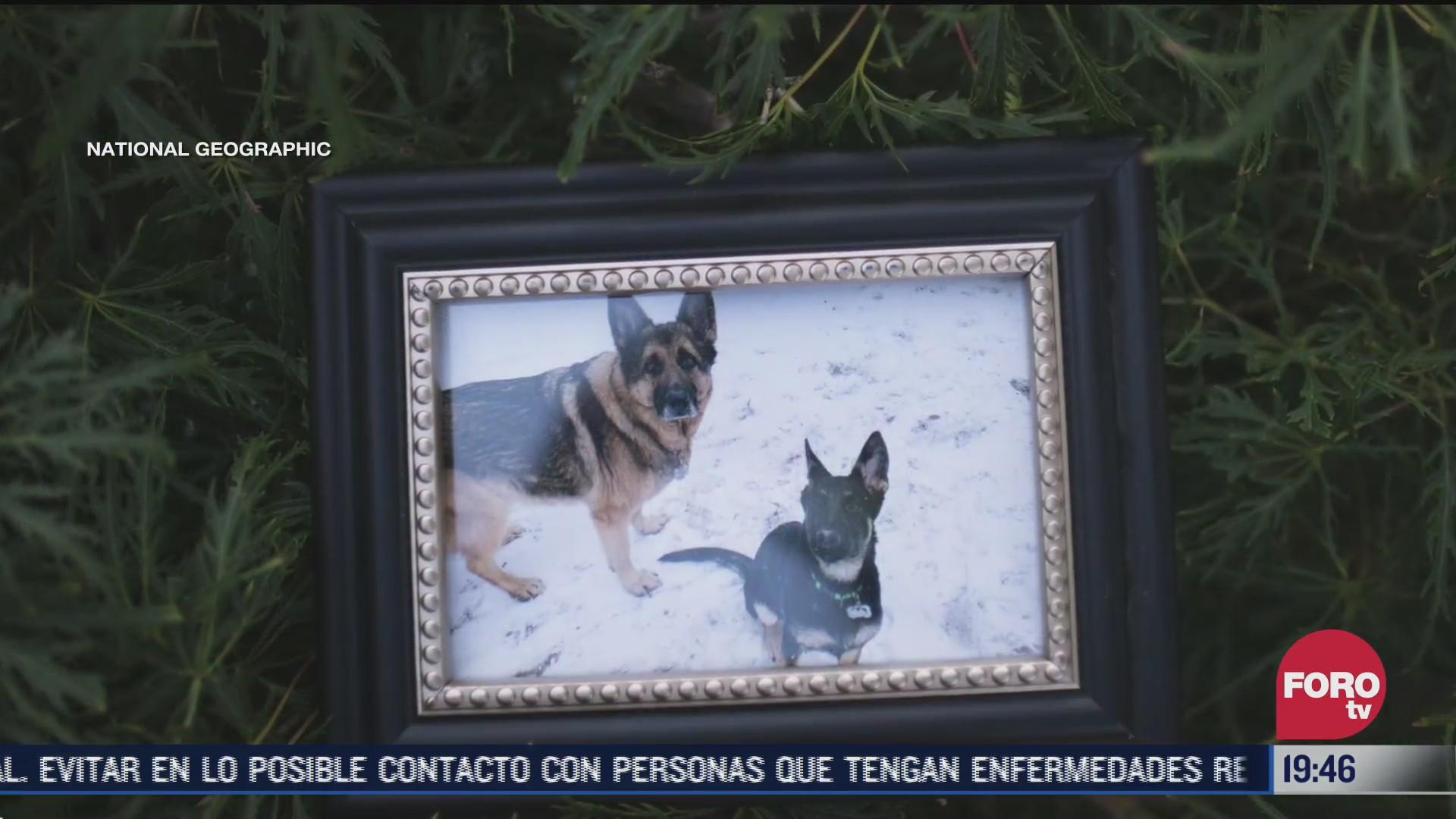 Dogilike.com :: แกะรอยการตาย! สุนัขตัวแรกในสหรัฐฯ ที่ตรวจพบเชื้อ Covid-19