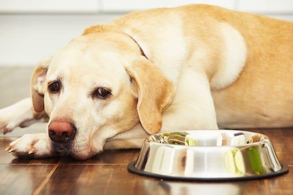 Dogilike.com :: สุนัขกินอาหารลดลงเกิดจากอะไรได้บ้าง ?