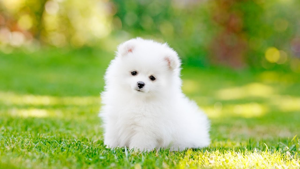 Dogilike.com :: หยุด! ซื้อสุนัขมาเลี้ยงก่อนวัยอันควร ถ้าไม่อยากให้สุนัขเป็นแบบนี้
