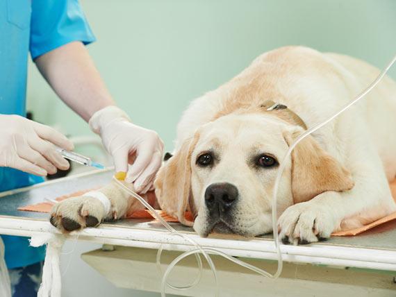 Dogilike.com :: การรักษาแบบมุ่งเป้า (targeted therapy) ทางเลือกใหม่การรักษาสุนัขในปัจจุบัน