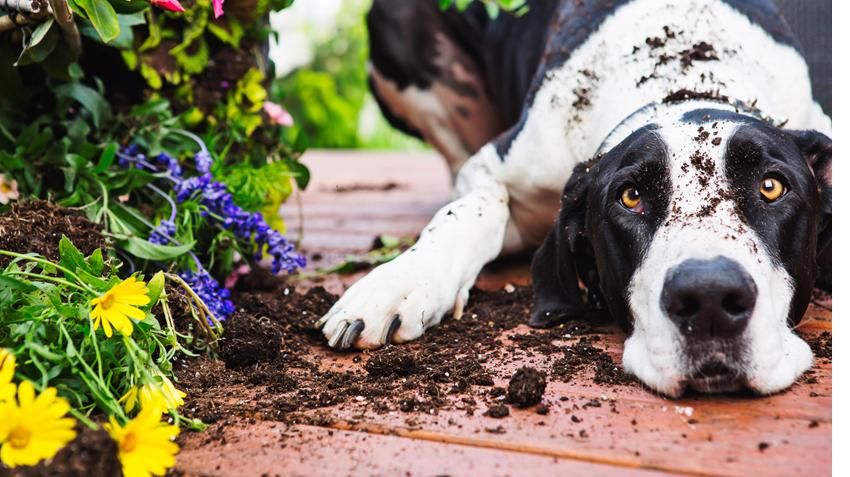 Dogilike.com :: ปรงสาคู พืชมีพิษที่อาจคร่าชีวิตสุนัขได้