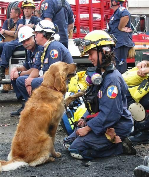 Dogilike.com :: ตามติดชีวิตสุนัขกู้ภัย ผลกระทบในระยะยาวหลังเหตุการณ์ 9/11