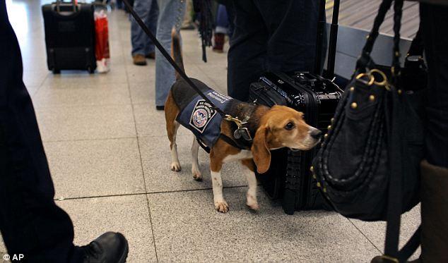 Dogilike.com :: 5 พันธุ์สุนัขที่นิยมนำมาใช้ในงานตำรวจ