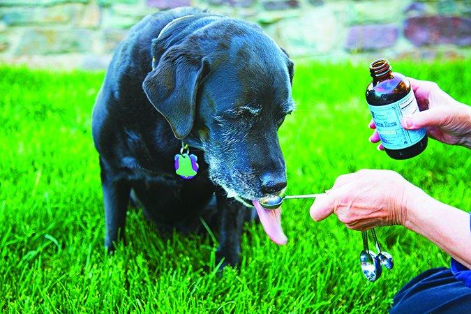 Dogilike.com :: เรื่องน่ารู้ วิตามินดีในสุนัข ตกลงแล้วดีหรือไม่ดี
