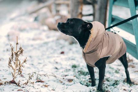 Dogilike.com :: อากาศเย็นแล้ว ... สุนัขจำเป็นต้องใส่เสื้อกันหนาวหรือไม่?