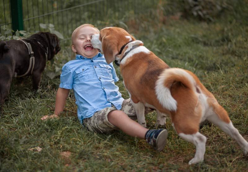 Dogilike.com :: เจาะลึกสาเหตุของการที่เด็กมักถูกสุนัขกัด