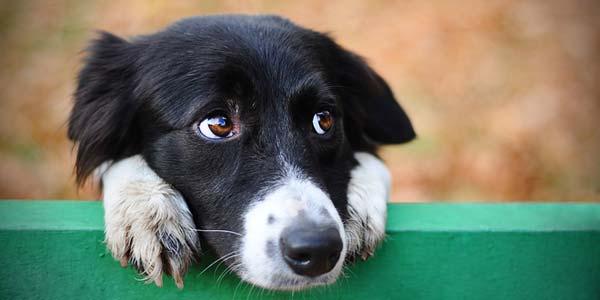 Dogilike.com :: นวัตกรรมคัดกรองมะเร็งในสุนัขแบบใหม่ ง่าย รู้เร็ว ไม่แพง
