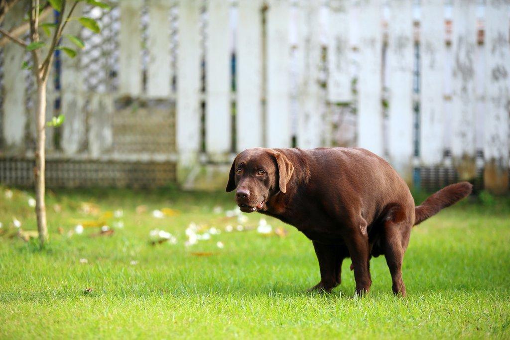 Dogilike.com :: เชื้อโนโรไวรัส (Norovirus) โรคระบาดจากคนสู่สุนัขได้