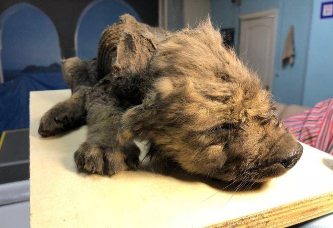 Dogilike.com :: ผลวิจัยชี้ สุนัขบ้านอาจถือกำเนิดช่วงยุคน้ำแข็ง