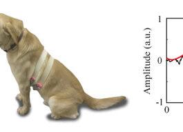 Dogilike.com :: นักวิจัยค้นพบ เซ็นเซอร์ตรวจวัดสัญญาณชีพแบบใหม่ในสัตว์เลี้ยง