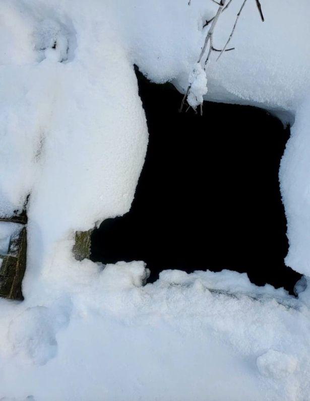 Dogilike.com :: รอดแล้ว! ตูบติดหิมะนาน 43 วัน หลังหายจากบ้านระยะทางไกล 20 ไมล์