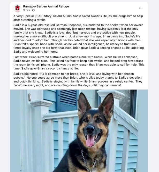 Dogilike.com :: ตูบฉลาด! ลากเจ้าของป่วยอาการกำเริบไปที่โทรศัพท์ รอดตายหวุดหวิด