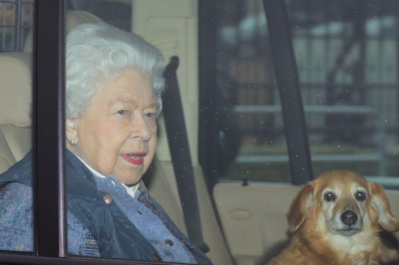 Dogilike.com :: สองคอร์กี้ สุนัขทรงเลี้ยงตัวใหม่ของควีนเอลิซาเบธที่ 2