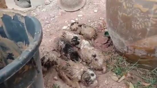 Dogilike.com :: แม่หมาสุดรักลูก ร้องให้คนช่วยลูกน้อยที่ติดอยู่ในท่อ