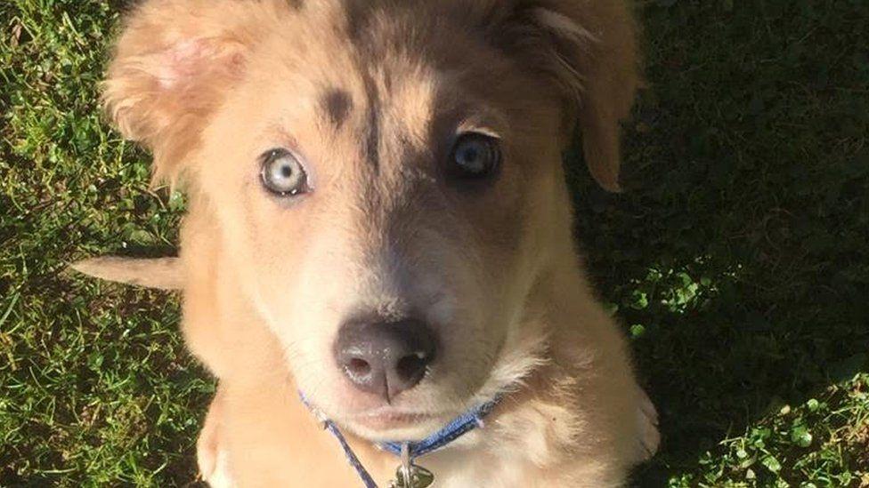 Dogilike.com :: สมาคมป้องกันการทารุณกรรมสัตว์เข้าช่วยเหลือสุนัขจากฟาร์มที่ทรุดโทรม