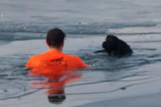 Dogilike.com :: หนุ่มฮีโร! กระโดดลงทะเลสาบน้ำแข็ง ช่วยชีวิตสุนัขกำลังจมน้ำ