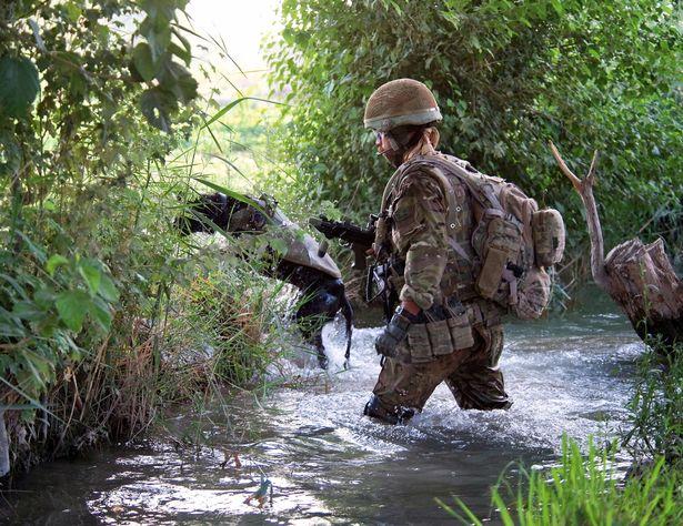 Dogilike.com :: สุนัขทหารเกือบ 1,200 ตัวถูกปลดประจำการตั้งแต่ปี 2002 เนื่องจากเสื่อมสภาพ
