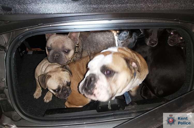 Dogilike.com :: น่าชื่นชม เจ้าหน้าที่พาสุนัขที่ถูกขโมยส่งคืนเจ้าของภายใน 20 นาที