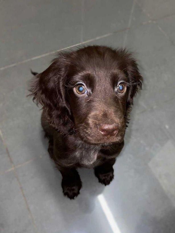 Dogilike.com :: น่ารัก! น้องหมาขนตาสวยเหมือนหลุดมากจากการ์ตูนดิสนีย์