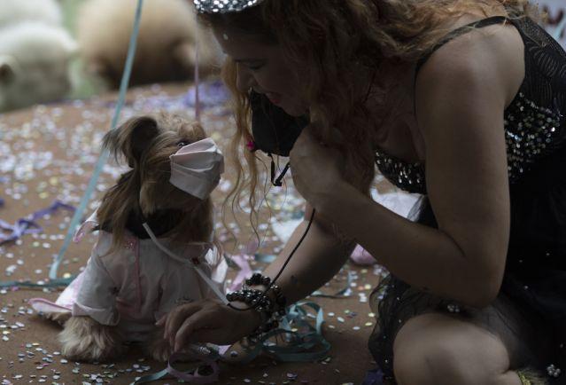 Dogilike.com :: น่ารัก! งานคานิวัลที่คนรักน้องหมารวมใจกันจัดขึ้นเพื่อสัตว์เลี้ยง