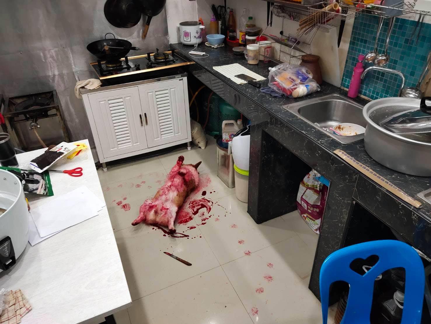 Dogilike.com :: ตกใจหมด!! น้องหมาเลือดอาบ ที่ไหนได้น้ำแดงหกใส่