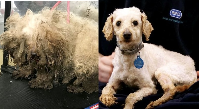 Dogilike.com :: จำแทบไม่ได้! แปลงโฉมเจ้าตูบ 10 ตัว หลังถูกทอดทิ้งอย่างน่าสงสาร