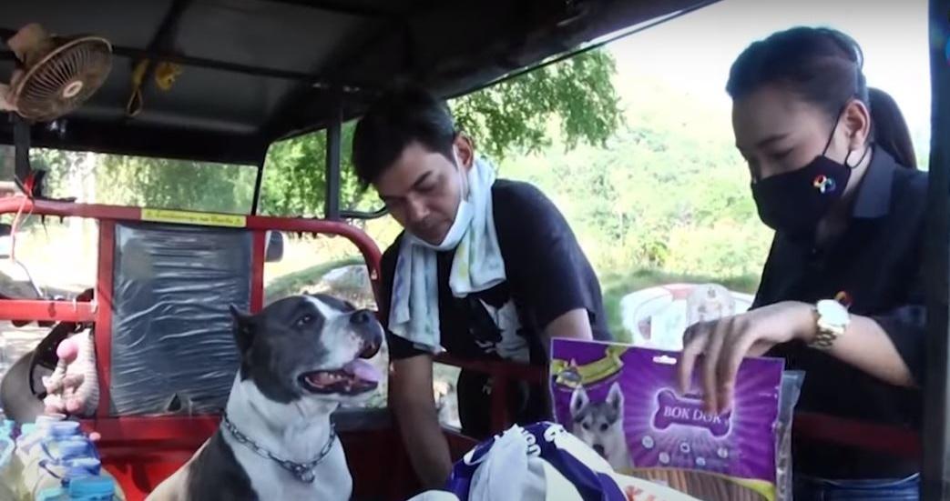 Dogilike.com :: คนใจร้ายแอบทิ้งหมาไว้สุสานนับ 300 กว่าตัว