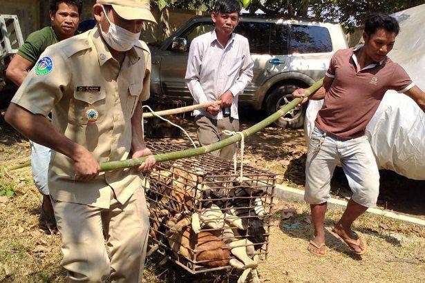 Dogilike.com :: ภาพสะเทือนใจ สุนัข 61 ตัวถูกขังไว้ในกรงก่อนส่งไปโรงฆ่าสัตว์!