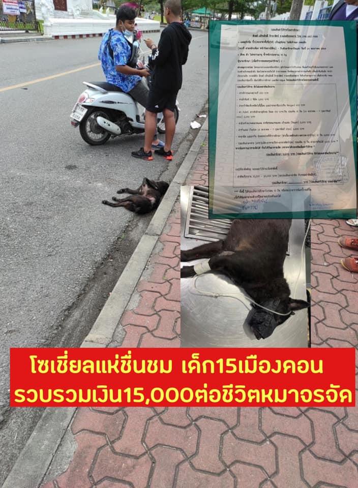 Dogilike.com :: ชื่นชม น้องนักเรียนช่วยกันหาค่ารักษาสุนัขจรจัดที่ถูกรถชน
