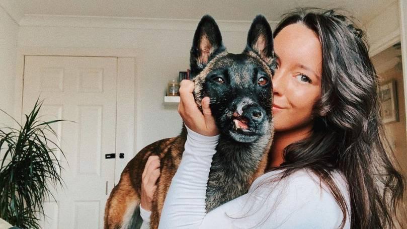 Dogilike.com :: น่ายินดี ระดมทุนช่วยสุนัขที่สูญเสียจมูกผ่าน Instagram กว่า 4,500 ปอนด์
