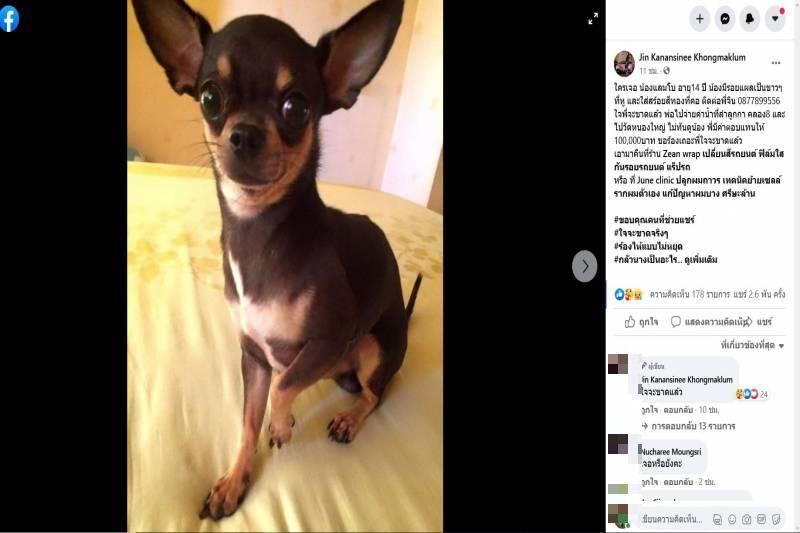 Dogilike.com :: สาวเหมาร้านก๋วยเตี๋ยวกินฟรี 7 วัน ตอบแทนที่หาสุนัขสุดที่รักพบ