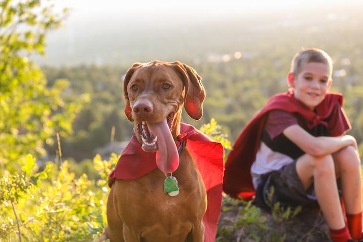 Dogilike.com :: 7 สายพันธุ์สุนัขพี่เลี้ยงเพื่อนที่เหมาะสำหรับเด็กๆ วัยซน