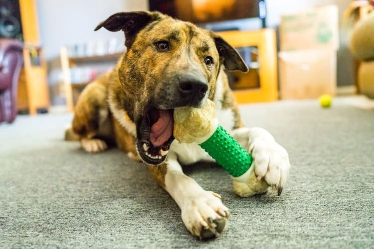 Dogilike.com :: สิ่งต้องห้าม ... ของอันตรายที่ไม่ควรให้สุนัขของคุณเคี้ยว