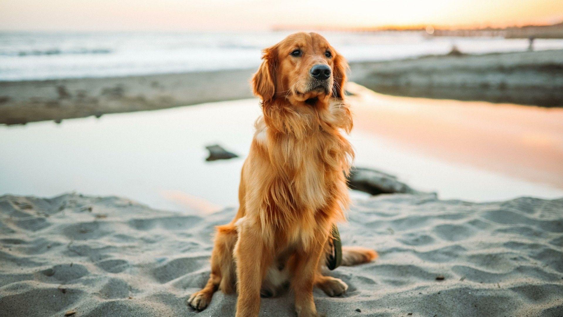 Dogilike.com :: จัดอันดับ 5 สายพันธุ์หนุ่มหล่อแห่งวงการสุนัข