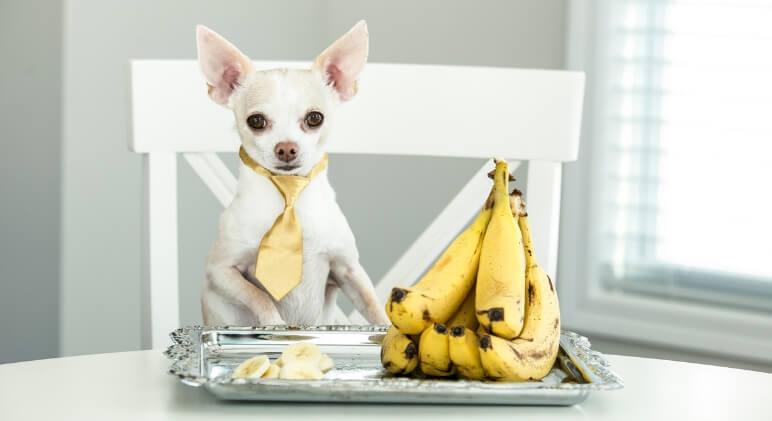 Dogilike.com :: เรื่องกล้วยๆ สำหรับน้องหมาที่คุณควรจะรู้