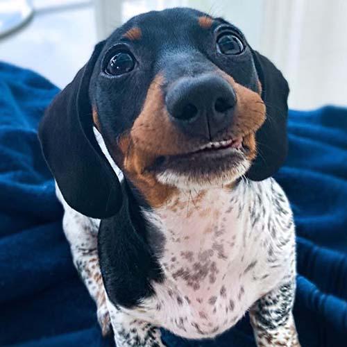 Dogilike.com :: ЮавХмкарйрб╬я╧╦ьЛ╢я╙╙ь╧╨я╖Юмт╜ау╒╧Юкавм╧╢яеЮаЮ╙уб╧!!