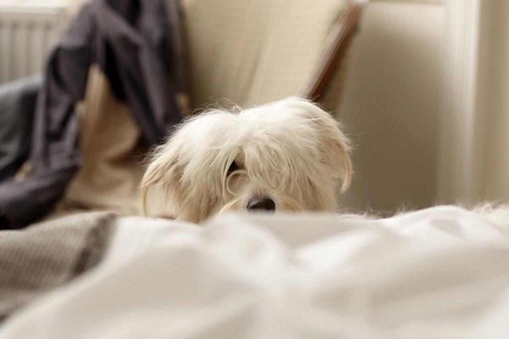 Dogilike.com :: น้องหมาปลุกให้พาไปฉี่กลางคืนประจำ พฤติกรรมนี้ผิดปกติไหม?