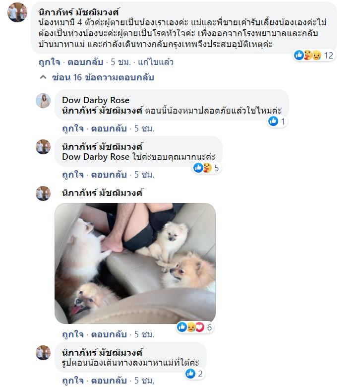 Dogilike.com :: สะเทือนใจ รถคว่ำเจ้าของสาหัส กู้ภัยเข้าช่วยน้องหมาปอมนั่งเฝ้าไม่ห่าง