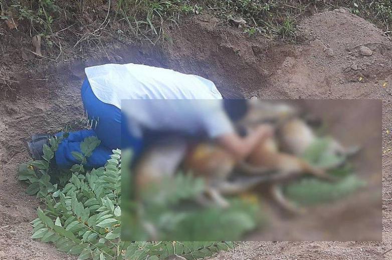 Dogilike.com :: สลด! ชาวบ้านร้องไห้กอดศพหมาแม่ลูกอ่อน โดนคนใจบาปวางยาเบื่อ