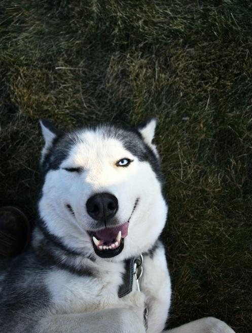 Dogilike.com :: 4 �Ըէ��� � ����§䫺����¹����ͧ������آ�Ҿ��