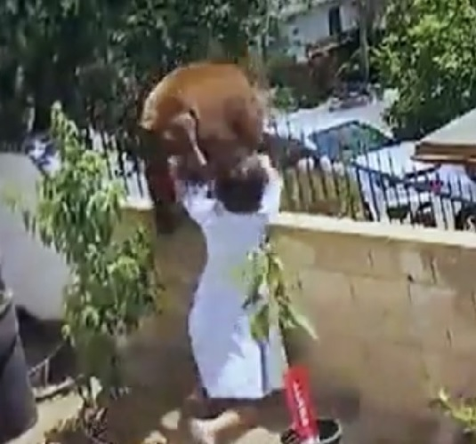 Dogilike.com :: гябцьХ╧йргЦ╗║еИр! ╪ея║кау╥уХ╨ь║Ю╒Ир╨Ир╧Ю╬вХм╙Хгб╙угт╣Ю╗Ир╣ы╨