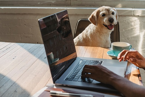 "Dogilike.com :: ™и«Ів§«'іЅ—єаЋІ"" аЌ""єйЌІ ж Ѕ""Ќ¬ўиаїзєаЊ""иЌєі'°«и""!"