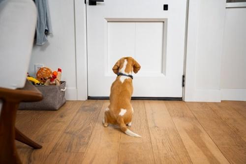 Dogilike.com :: เปิดตัว! ประตูอัตโนมัติสัตว์เลี้ยง เทคโนโลยีมาแรงแห่งปี 2021