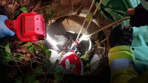 Dogilike.com :: ทีมกู้ภัยช่วยชีวิตเจ้าตูบ หลังตกบ่อน้ำลึก 20 ฟุตขณะเดินเล่น!