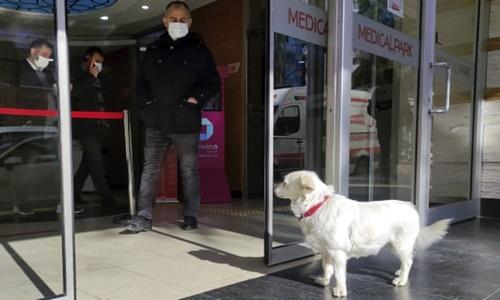 Dogilike.com :: ไวรัลจากตุรกี! ตูบซื่อสัตย์รอเจ้าของป่วยอยู่หน้าโรงพยาบาลทุกวัน