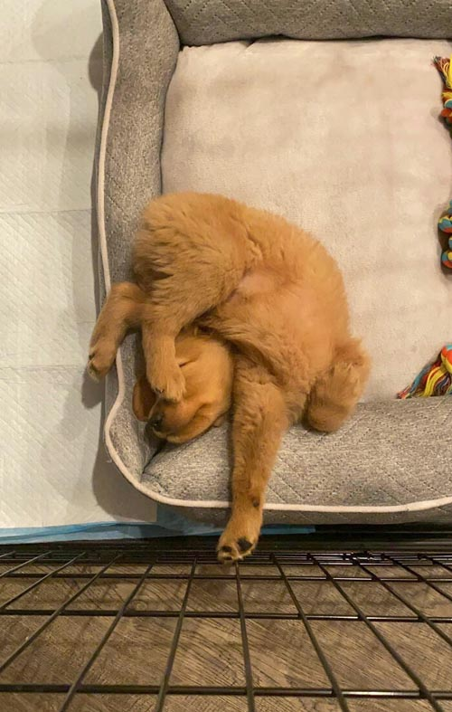 Dogilike.com :: รวม 20 ภาพน่ารักคลายเครียดเมื่อน้องหมานอนท่ายาก!