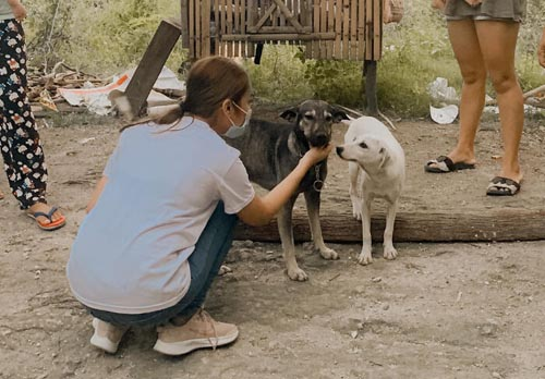 Dogilike.com :: เจ้าตูบฮีโรเห่าเรียกให้คนช่วยชีวิตทารกแรกเกิดถูกทิ้ง!