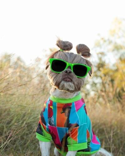 Dogilike.com :: สะบัดต่อไม่รอแล้ว! เจ้า Ducky ตูบแฟชั่นนิสต้าขวัญใจชาวออนไลน์