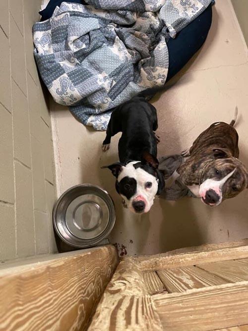 Dogilike.com :: สุดยอดฮีโร! ชายไร้บ้านเสี่ยงชีวิตช่วยหมาแมวในเหตุไฟไหม้ศูนย์พักพิงฯ